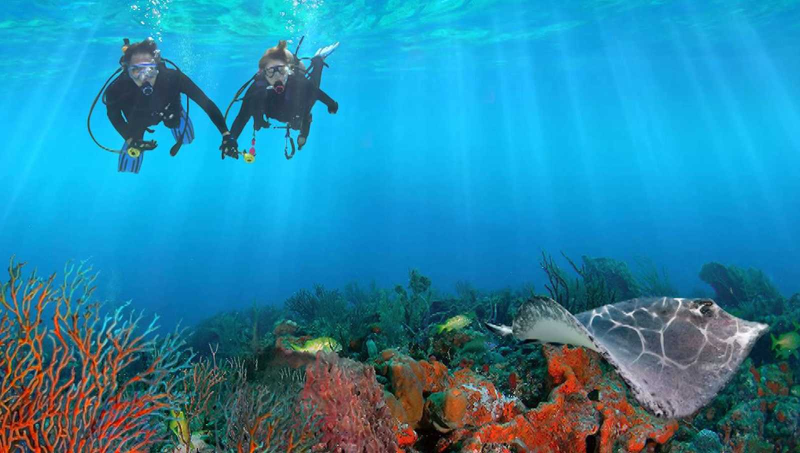 Five Ways To Enjoy Diving This Summer Ft Lauderdale Dive And Scuba Gear Sea Experience South Florida